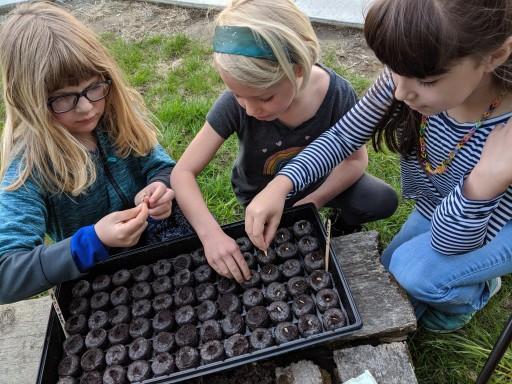Starting pumpkin seeds